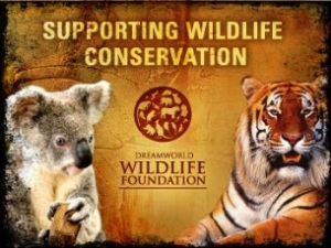 dreamworld wildlife foundation promo 1